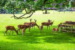 scotland obrazy royalty free