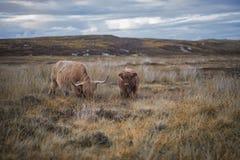 Scotland. Beautiful landscape in Scotland , United Kingdom Royalty Free Stock Image