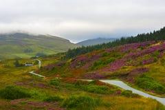 Scotland heather valley. Skye Island royalty free stock images