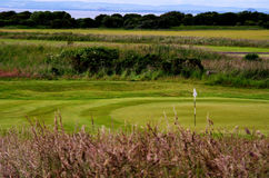 Scotland Links Style Golf Course Stock Images