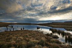 Scotland Moor at sunrise Stock Photography