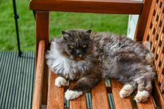 The domestic cat is lying on a bench, basking in the sun. Scotland is often cold and cloudy sky, the cat has left the house lying on a bench and collects royalty free stock images