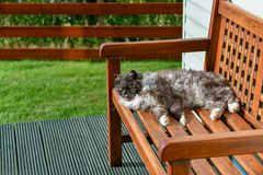 The domestic cat is lying on a bench, basking in the sun. Scotland is often cold and cloudy sky, the cat has left the house lying on a bench and collects stock photos