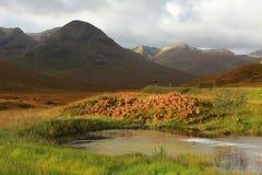 Scotland Royalty Free Stock Image