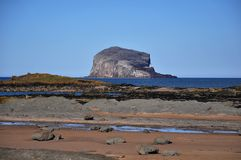 Scotland. Picturesque village to rest and sport in Scotland North Berwick with a bird island Royalty Free Stock Image