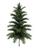 Scots pine tree isolated on white. Background Stock Images