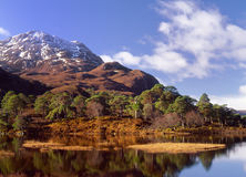 Scots pines(Pinus sylvestris) loch Clair,Scotland Royalty Free Stock Image