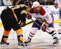 Scott Gomez Montreal Canadiens Stockfotografie