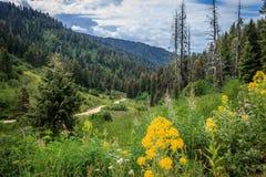 Scott Mountain Road Flowers stock afbeelding