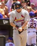 Scott Rolen, St Louis, cardeais 3B Fotos de Stock Royalty Free
