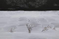 Scotti le piante nell'inverno fotografie stock libere da diritti