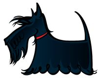 Scottie Royalty Free Stock Photography