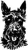 Scottie Dog Royalty Free Stock Image