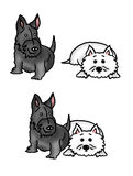 Scottie dog and West Highland Terrier. Adorable, happy little scottie and westie pal Stock Images