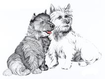 Scottie dogs illustration Stock Photography
