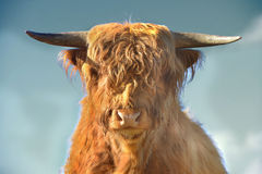 Scottish highlander Royalty Free Stock Photography