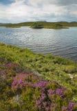 Scottish благоустраивают с вересковой пустошью и озером highlands Шотландия стоковое изображение rf
