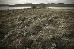 Scottish благоустраивают с вересковой пустошью и озером highlands Шотландия стоковые изображения