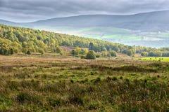 scottish ландшафта гористой местности Стоковые Изображения