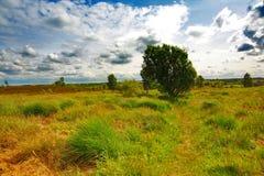 scottish ландшафта травы Стоковое фото RF