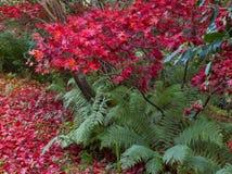 Scottish Autumn Garden Colour Lizenzfreies Stockfoto