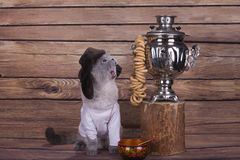 Scottish cat in Russian folk clothes brews samovar.  Royalty Free Stock Photography