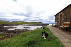 Scottish coast with stone house and sheepdogs Stock Photography