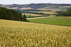 Scottish Countryside. The rolling Scottish countryside Stock Photography