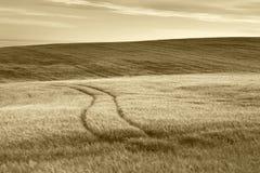 Scottish countryside landscape in sepia tone. Scotland. UK Royalty Free Stock Image