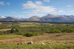 Scottish countryside and snow topped mountains Ben Nevis Scotland UK in the Grampians Lochaber Highlands Royalty Free Stock Photography