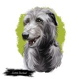 Scottish Deerhound pet originated from Scotland digital art illustration . Canine with long haired coat from Britain. Purebred watercolor portrait, pet clip art royalty free illustration