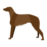 Scottish Deerhound Stock Photo