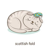 Scottish fold. Cat character  on white Royalty Free Stock Photo