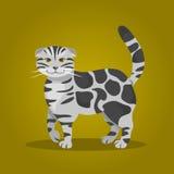 Scottish Fold cat. Vector Illustration Stock Image