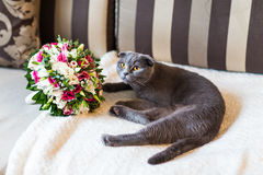 Scottish fold cat and wedding bouquet Stock Images