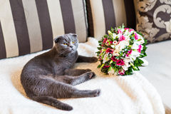 Scottish fold cat and wedding bouquet Stock Image