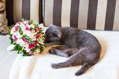 Scottish fold cat and wedding bouquet Stock Photo