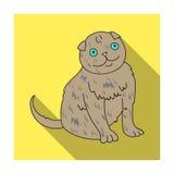 Scottish Fold icon in flat style  on white background. Cat breeds symbol stock vector illustration. Stock Photography