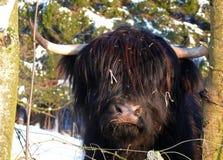 Scottish Gaelic Highland Stock Images
