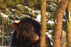 Scottish Gaelic Highland Stock Image