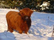Scottish Gaelic Highland Royalty Free Stock Image