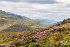 Scottish Highlands LT Stock Photography