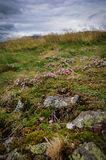 Scottish Highlands Vegetation Royalty Free Stock Images