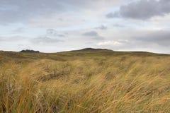 Scottish hilly grassland Stock Photography