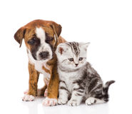 Scottish kitten and puppy looking away. isolated on white backgr Stock Photography