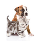 Scottish kitten and puppy looking away. isolated on white backgr Royalty Free Stock Photography