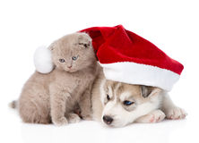 Scottish kitten and Siberian Husky puppy with santa hat. isolated on white Royalty Free Stock Images
