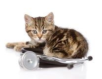 Scottish kitten with a stethoscope. isolated on white background Royalty Free Stock Image