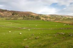 Scottish landscape Royalty Free Stock Photography