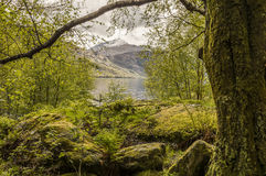 Scottish landscape beside lake. Snowy peak seen from a moss covered wood at the shores of lake Loch Lomond, Scotland Stock Images